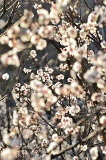 自然の写真・画像素材[5869]