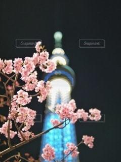風景の写真・画像素材[5863]