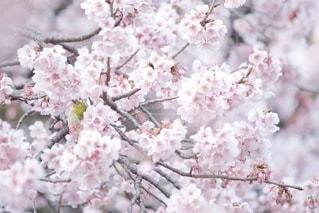 自然の写真・画像素材[5858]