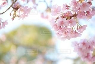 自然の写真・画像素材[5853]