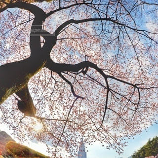 自然の写真・画像素材[5852]