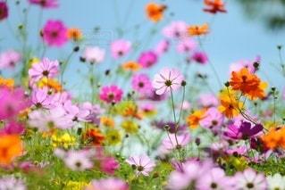 自然の写真・画像素材[5850]