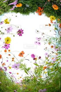 自然の写真・画像素材[5832]