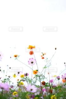 自然の写真・画像素材[5836]