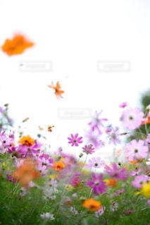 自然の写真・画像素材[5835]