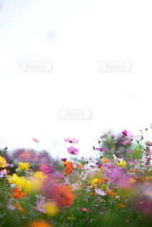 自然の写真・画像素材[5834]