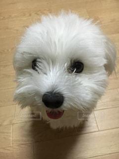 No.258810 犬