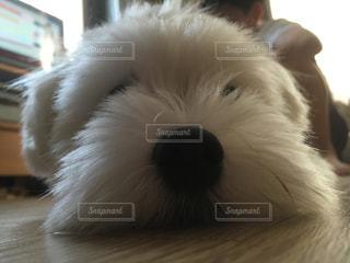 No.282980 犬