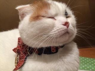 猫の写真・画像素材[258894]