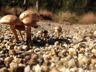自然の写真・画像素材[259107]
