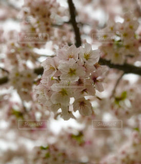 自然の写真・画像素材[521479]