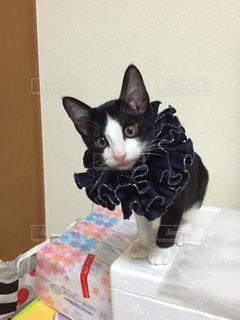 No.261045 猫
