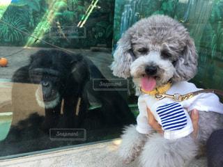 着ぐるみを着た犬の写真・画像素材[1133606]
