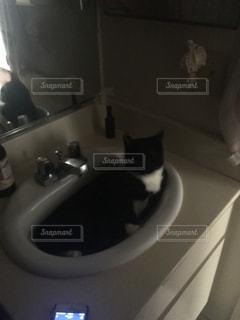猫が好きの写真・画像素材[260167]
