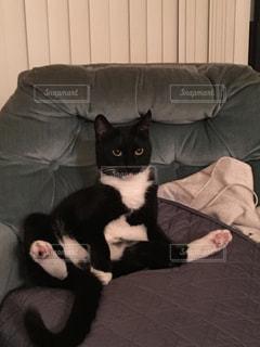 猫が好きの写真・画像素材[260179]
