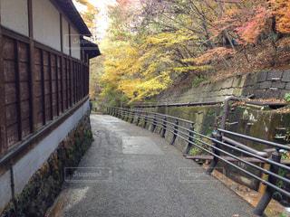 秋の写真・画像素材[259649]
