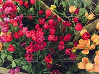 花の写真・画像素材[328958]