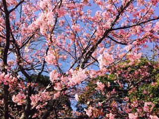 花の写真・画像素材[340579]