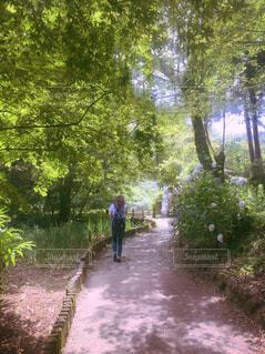 森の中のパスを歩いている人のグループの写真・画像素材[851848]