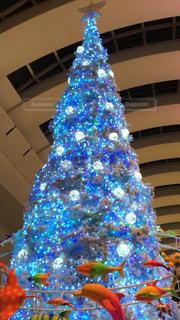 クリスマスツリーの写真・画像素材[279683]