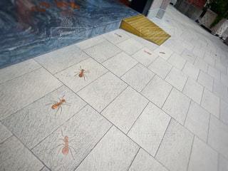 蟻の写真・画像素材[657117]