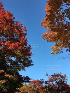 自然の写真・画像素材[260058]