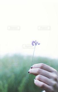 花の写真・画像素材[5818]
