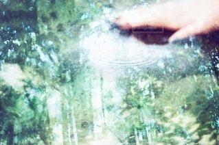 木の写真・画像素材[5812]