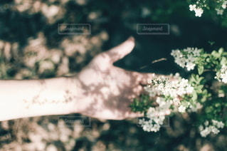 自然の写真・画像素材[5799]