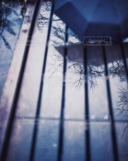木の写真・画像素材[5795]