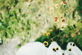 自然の写真・画像素材[5775]