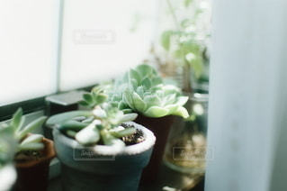 No.5758 植物
