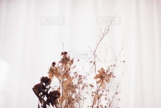 花の写真・画像素材[5755]