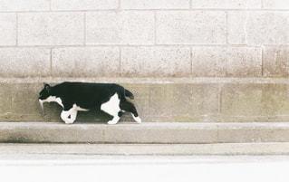 猫の写真・画像素材[5751]
