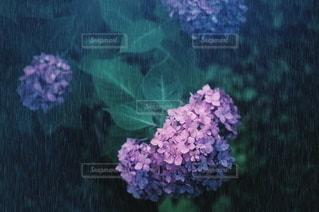 花の写真・画像素材[5748]