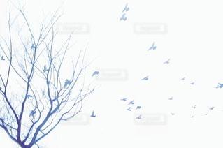 風景の写真・画像素材[5733]