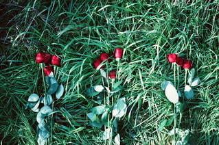 花の写真・画像素材[5729]