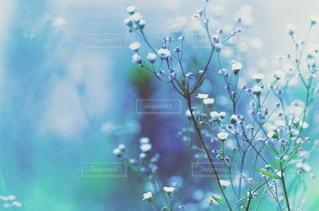 花の写真・画像素材[5722]