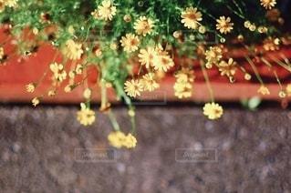 花の写真・画像素材[5717]