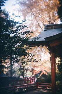 建物の前にツリーの写真・画像素材[930470]