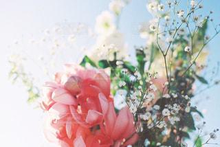 植物にピンクの花の写真・画像素材[1009097]