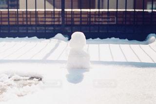 雪の中でシロクマ - No.1009100