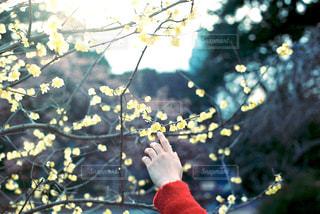 甘い春の写真・画像素材[1016149]