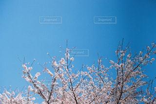 近くの木のアップの写真・画像素材[1104277]