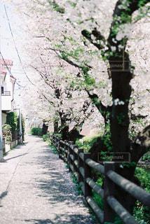 道路の脇に木がパスの写真・画像素材[1104278]