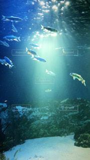 人々 のグループは水中の写真・画像素材[1166100]