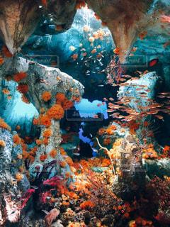 海の写真・画像素材[1166102]