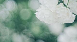 近くの花のアップの写真・画像素材[1244771]