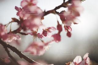 植物にピンクの花の写真・画像素材[1840911]
