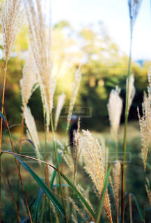 植物のクローズアップの写真・画像素材[2681491]